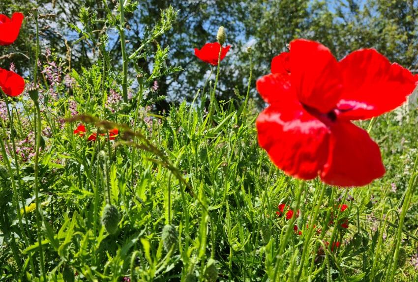 Faune et Flore de Normandie